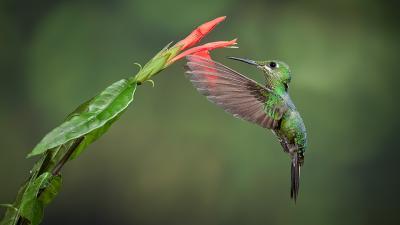 20131014171257-colibri-deepgreen.jpg