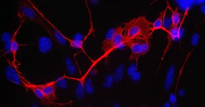 20140723134833-celulas-lab-farrugia-header.jpeg