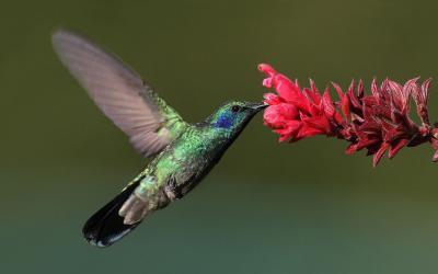"""""""Los pájaros no guardan nada""""..."""